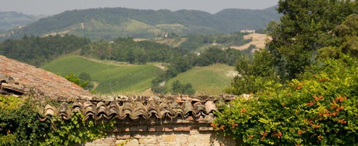 良質なスプマンテの産地、オルトレポ・パヴェーゼの生産者、カステッロ・ディ・ステファナーゴの葡萄畑